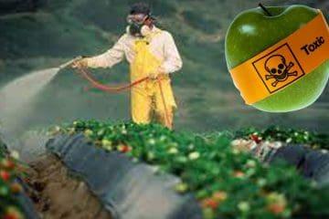 Вплив пестицидів, гербіцидів та інсектицидів на здоров'я людини